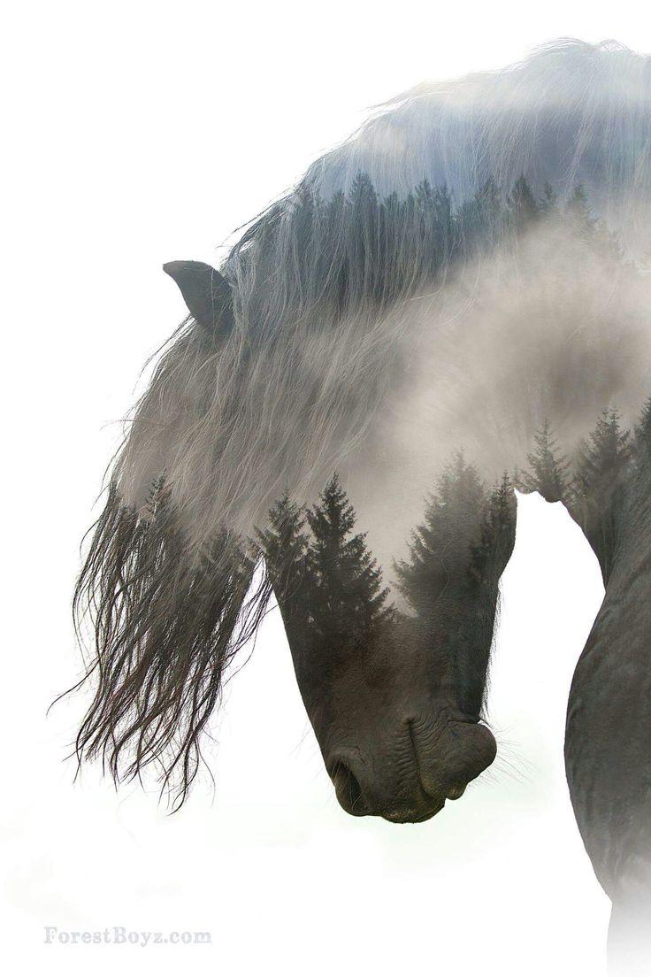 736x1104 Beautiful Horse Drawings
