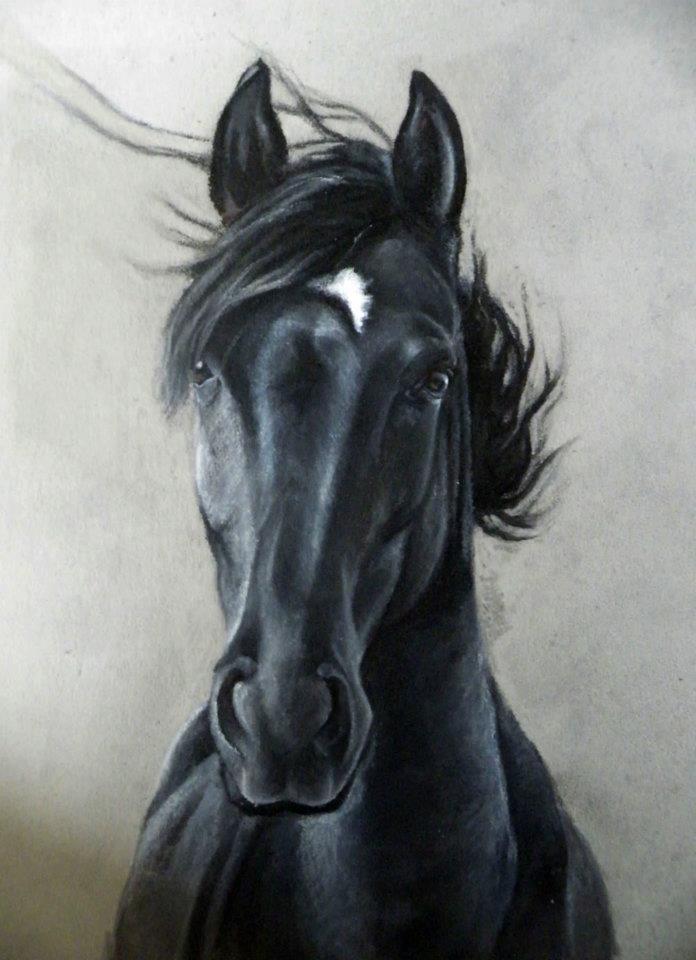 696x960 Beautiful Horse Drawing Pet Portraits Horse Drawn