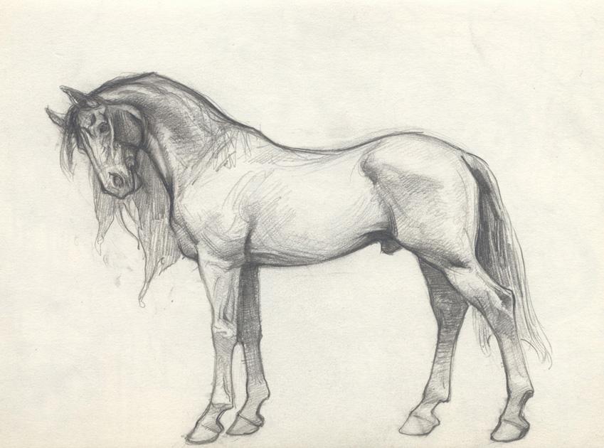 849x630 Petar Art Horses