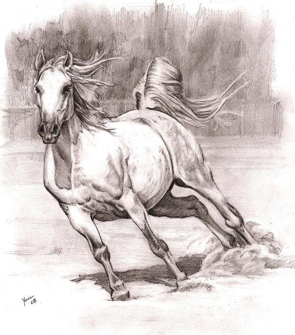 600x682 Horse By Alleycatsgarden