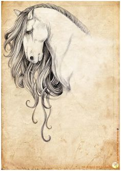 236x334 Horse Drawings