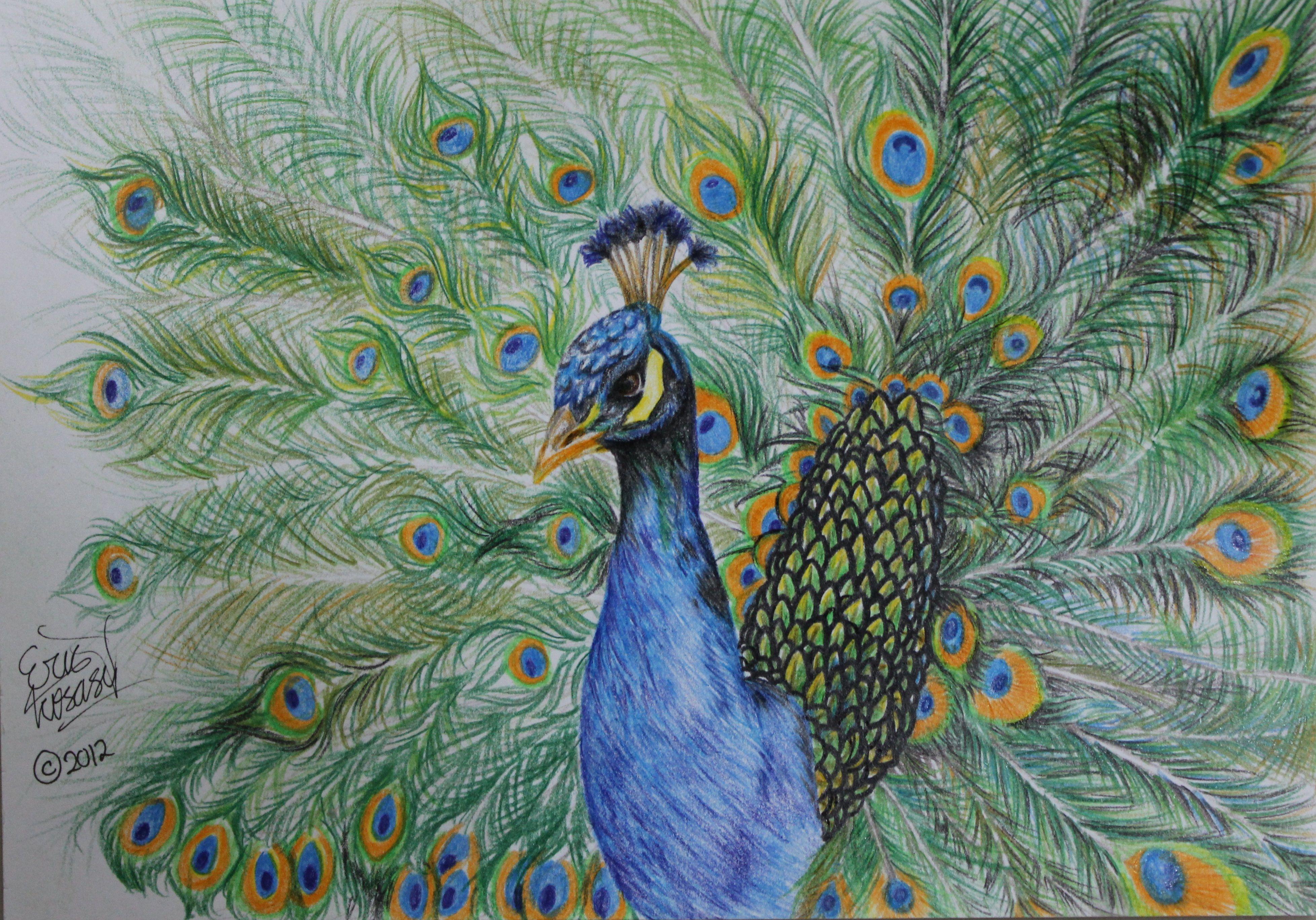 3913x2736 Beautiful Peacock Drawing By Kokosasih Best Peacock Drawing