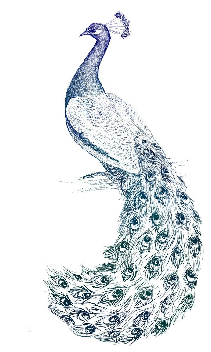 692x1154 Beautiful Pencil Sketches Peacock The Best Peacock Drawing
