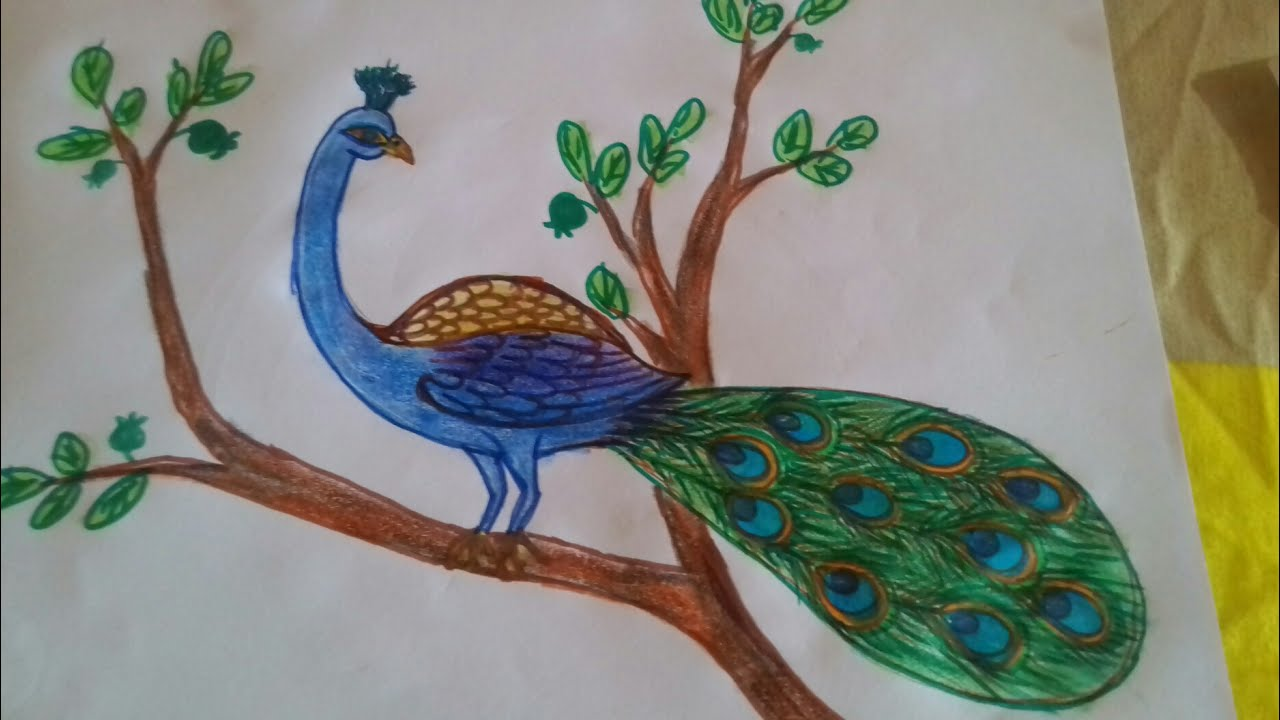 1280x720 How To Draw A Beautiful Peacock
