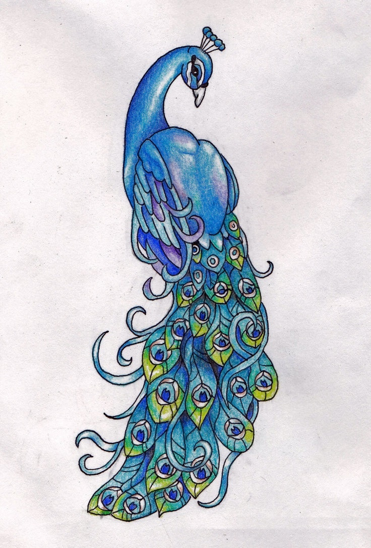 736x1086 Realistic Peacock Drawing 7 Best Peacock Tattoos Images