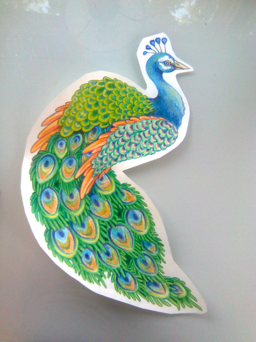 900x1200 Peacock Drawing By ~kittencaboodles On As Graphics