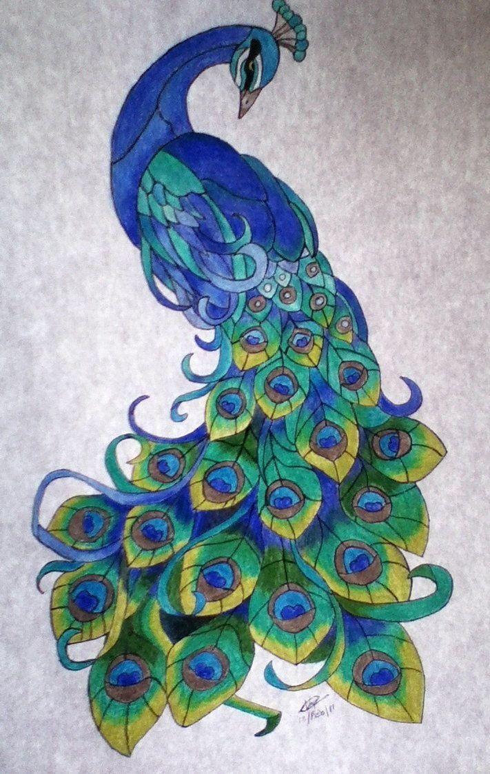 711x1123 Peacock Drawings