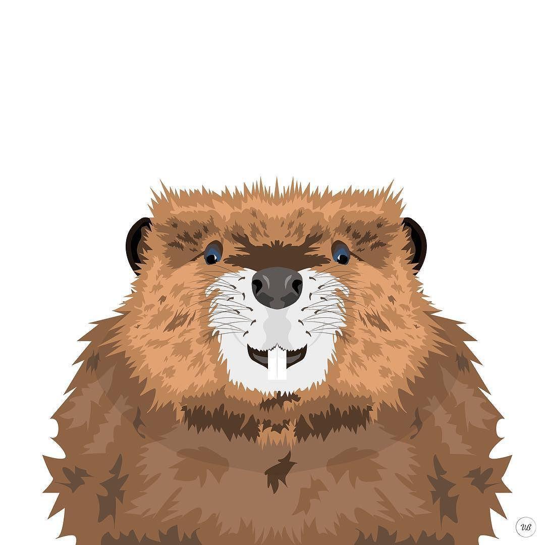 1080x1080 Beaver