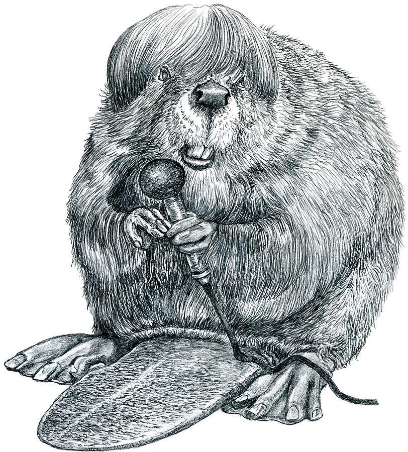 812x900 Beaver Drawing By Wayne Pruse