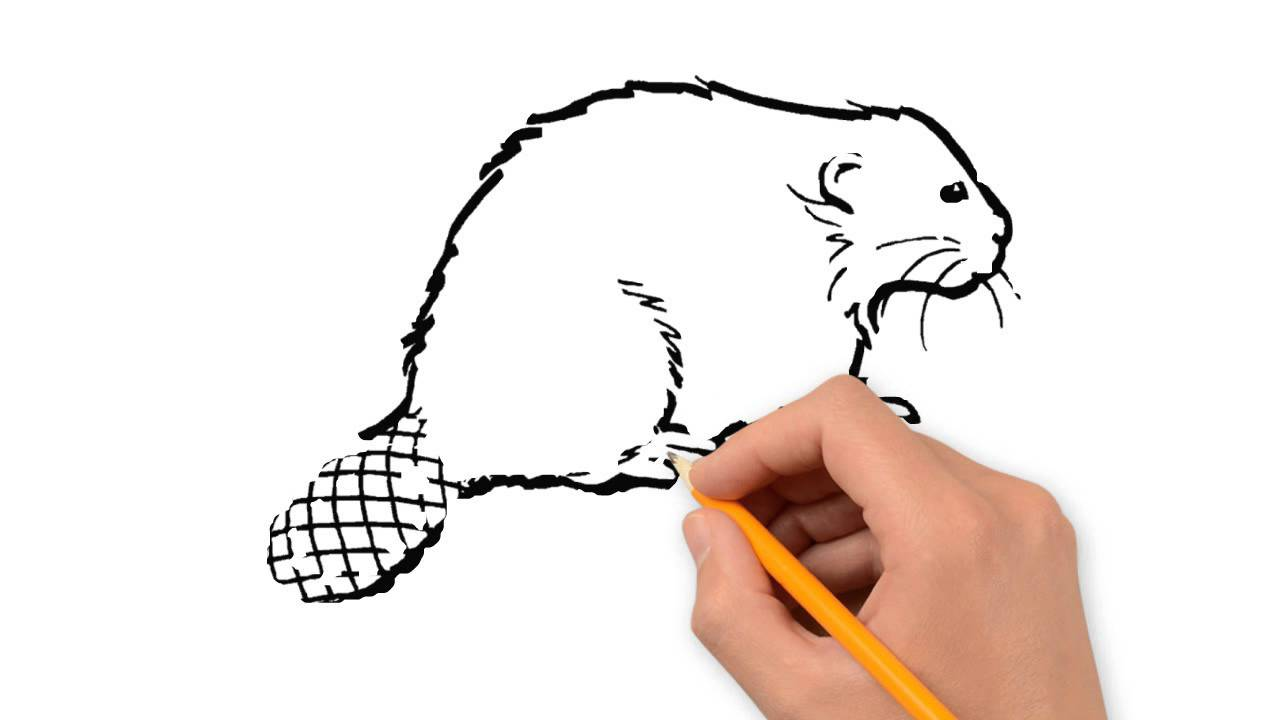 1280x720 Beaver Animals Pencil To Draw Step By Step