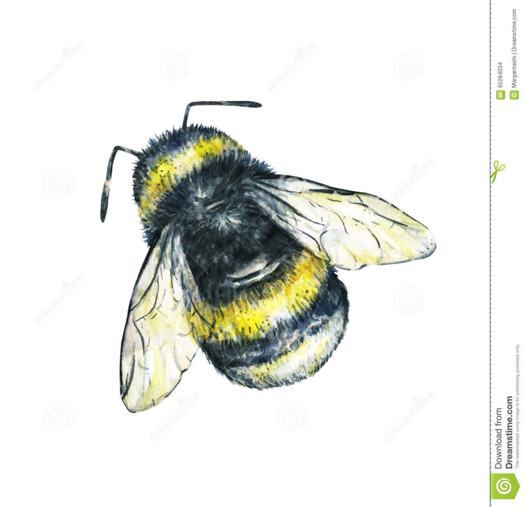 1024x989 Drawing Of Bumble Bee Drawing Of A Bumble Bee Drawing Lesson How