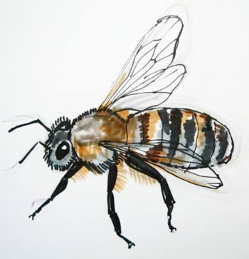 350x363 How To Draw A Honeybee