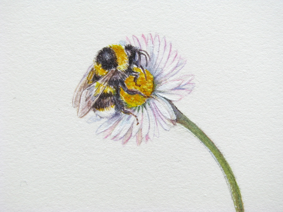 Daisy Flower Line Drawing : Bee on flower drawing at getdrawings free for personal use