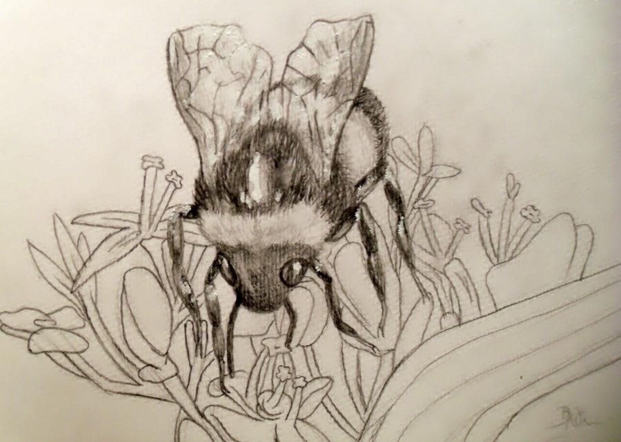 900x641 Bumble Bee Sketch By Yukilapin