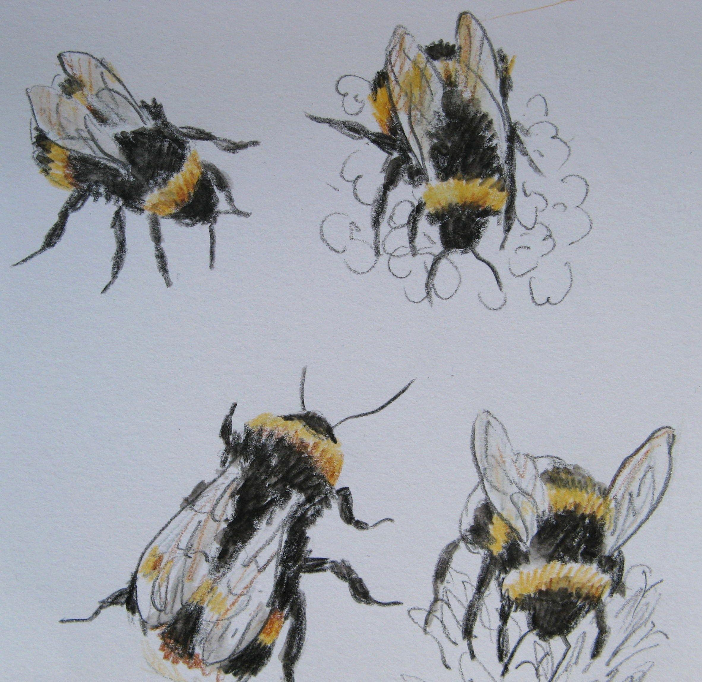 2364x2297 Bumble Bee Drawing