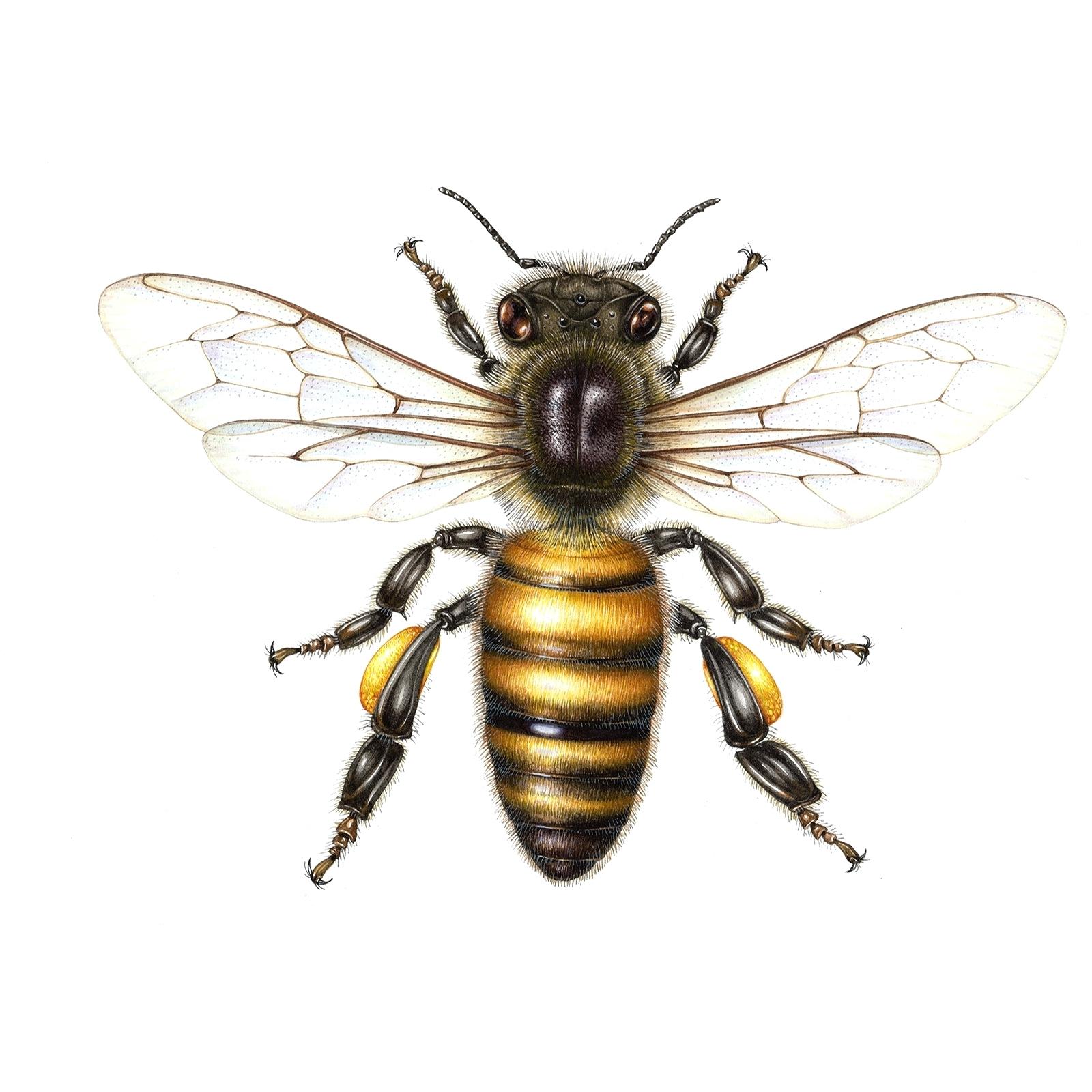 1600x1600 Honey Bee Rug Hooking Dinah Pattern By Honey Bee Hive Honey Bee