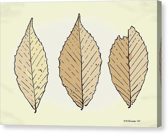 546x435 Beech Leaf Illustration Drawing By Jamie Jorgensen