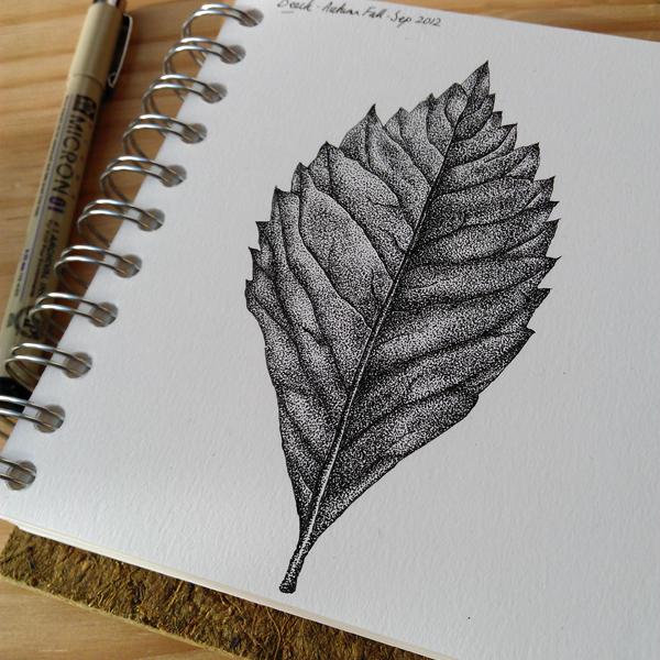 600x600 Lorrie Whittington Beech Leaf