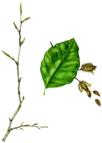 357x500 News Edible Botanical Illustration Eat What You Draw