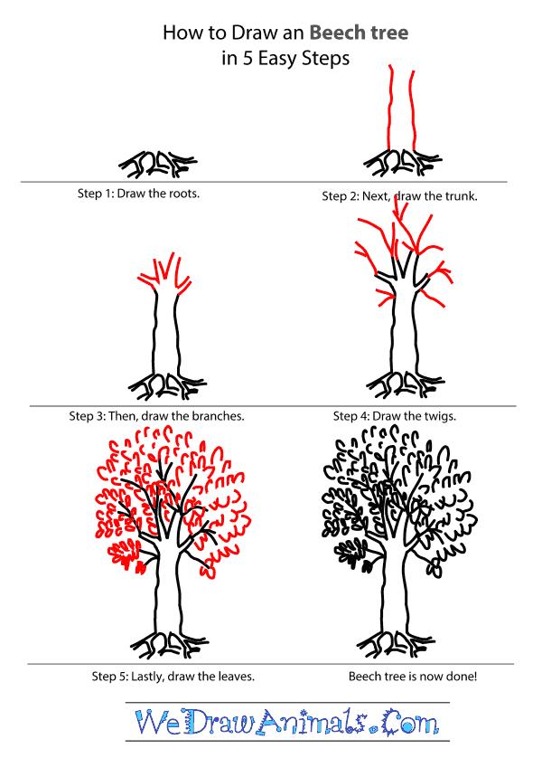 600x838 Beech Tree Tutorial.png
