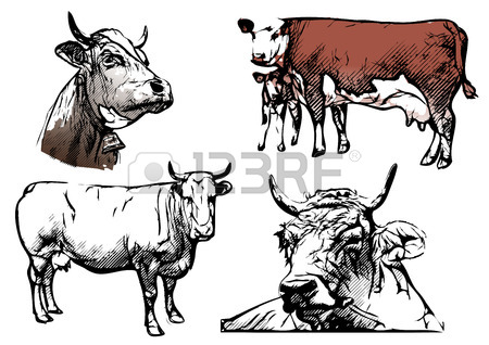 450x318 6,977 Beef Cattle Cliparts, Stock Vector And Royalty Free Beef