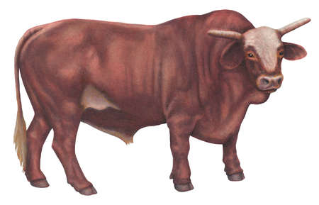 450x289 Stock Illustration