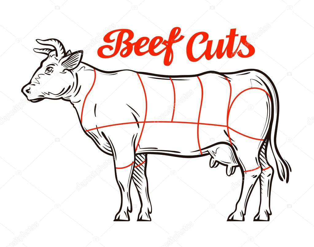 1023x804 Vector Beef Chart. Meat Cuts Or Butcher Shop Stock Vector