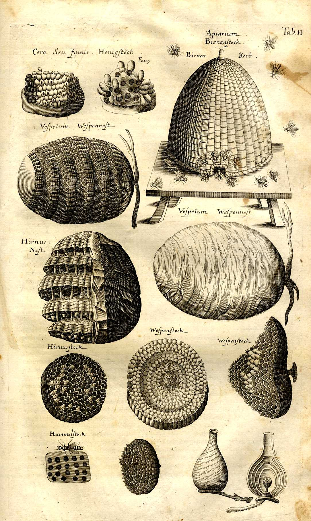 1084x1812 Encyclopedie Universelle De La Langue Abeille