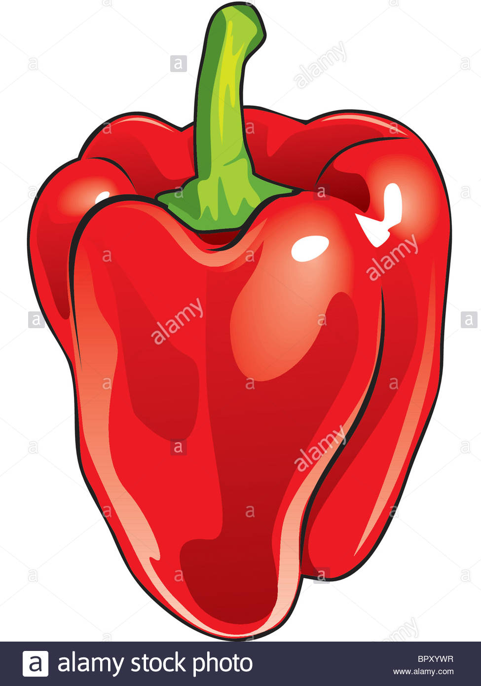 975x1390 Drawing Of A Red Bell Pepper Stock Photo 31325443