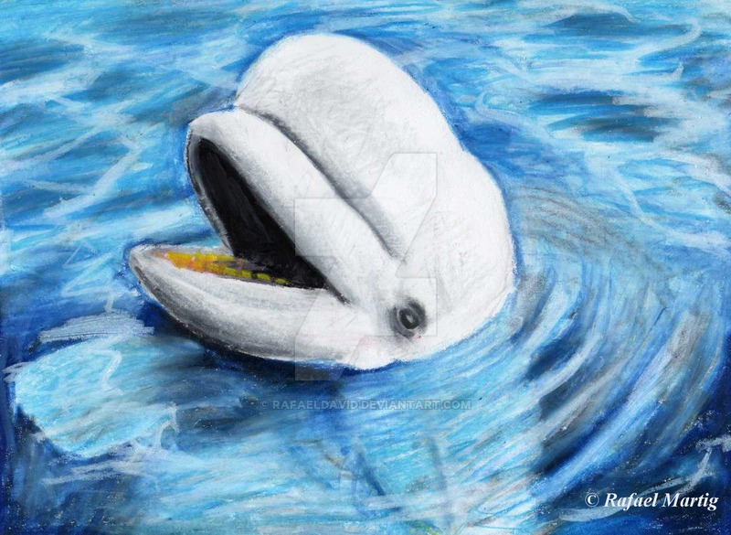 Beluga Whale Drawing at GetDrawings.com | Free for personal use ...