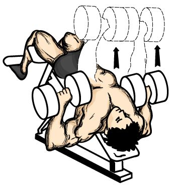 356x370 Decline Bench Press Exercise For Chest Gofitandhealthy