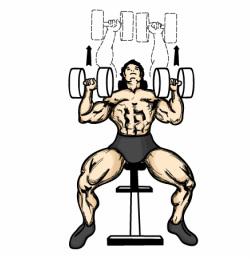 250x259 Exercises