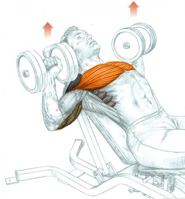 Bench Press Drawing At Getdrawings Com Free For Personal