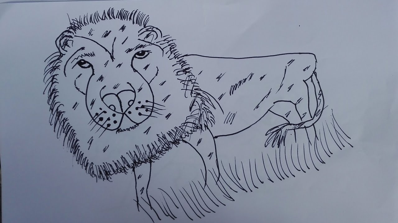 Line Drawing Of A Tiger S Face : Bengal tiger drawing at getdrawings free for personal use