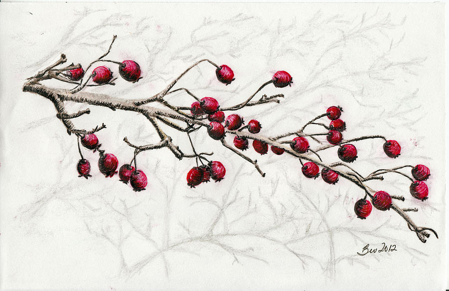 900x583 Winter Berries Drawing By Beverly Farrington