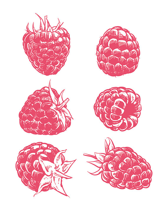 570x713 80% Off Sale Drawing Raspberry Isolated. Hand Drawn Fruit Vector