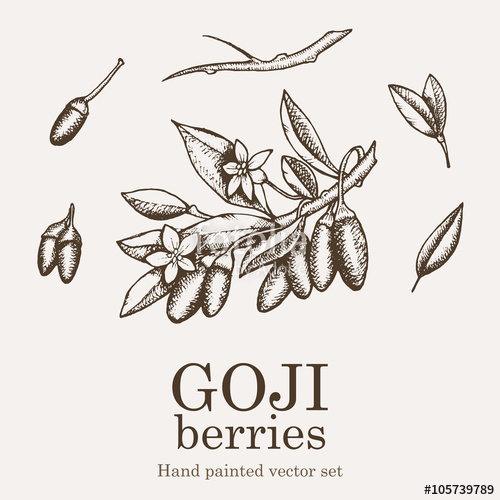 500x500 Goji Berry Superfood Set. Health Nutrient Food Vector Hand Drawing