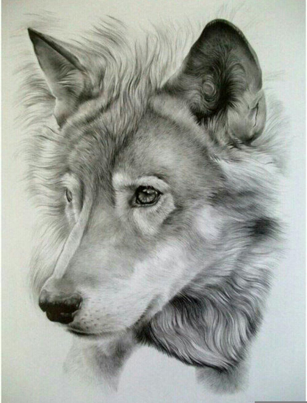 1024x1341 Best Drawing In The World