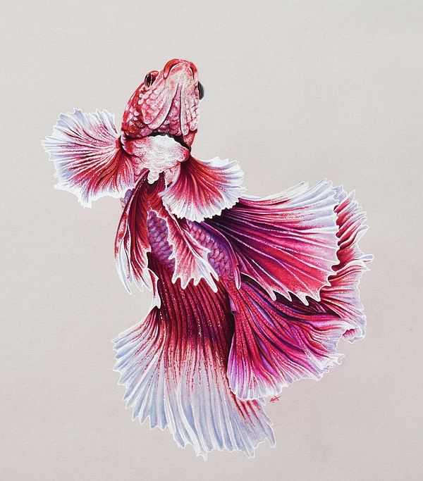 600x683 Betta Fish 4 Tote Bag For Sale By Biophilic Art