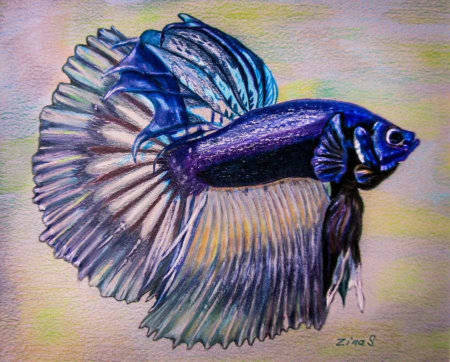 900x725 Betta Fish Drawing By Zina Stromberg