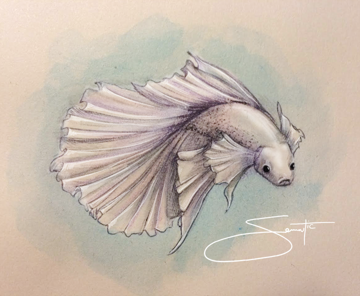 720x592 Betta Illustrations