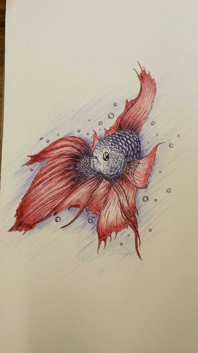 670x1191 Betta Fish Drawing By Ktruong7