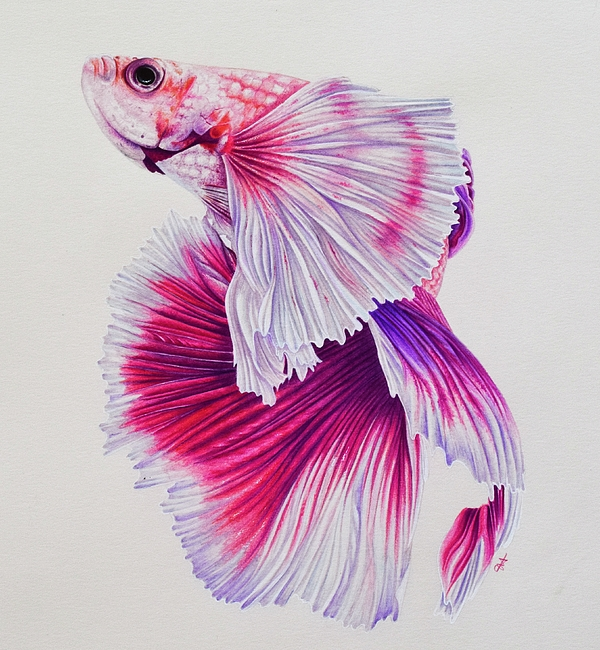 600x650 Pink Betta Fish 2 Round Beach Towel For Sale By Biophilic Art