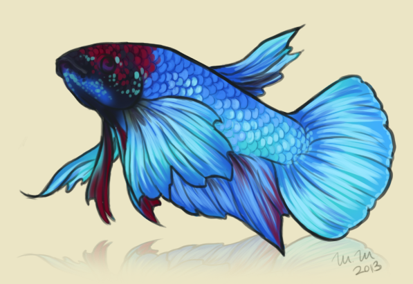 597x411 Betta Fish Drawing