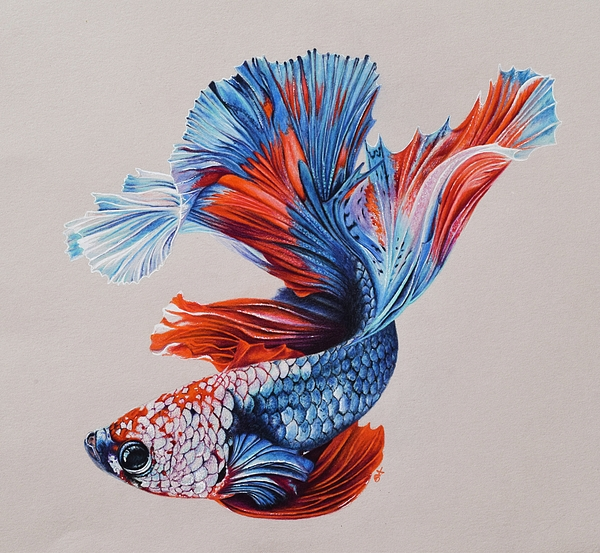 600x553 Betta Fish 5 Tote Bag For Sale By Biophilic Art