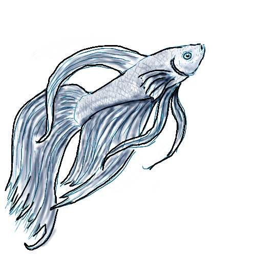 500x500 Betta Fish Drawing Related Keywords Amp Suggestions