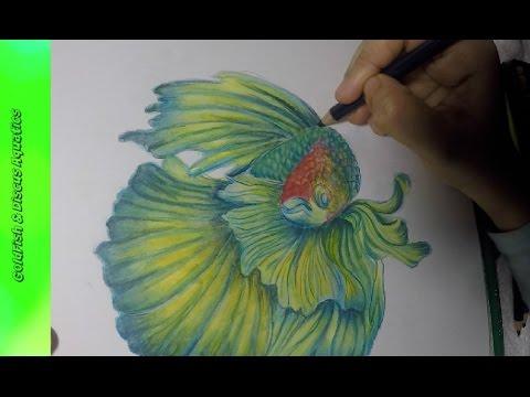 480x360 How To Draw Betta Fish