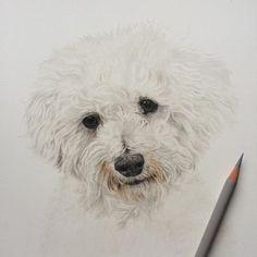 236x236 Custom Pet Portrait, Custom Charcoal Drawing, Bichon Frise, Dog