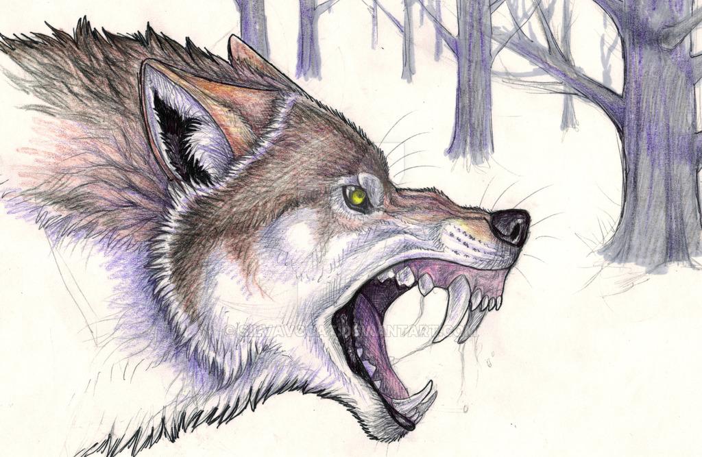 1024x667 Afbeeldingsresultaat Voor Bad Wolf Wood Carving Wolf