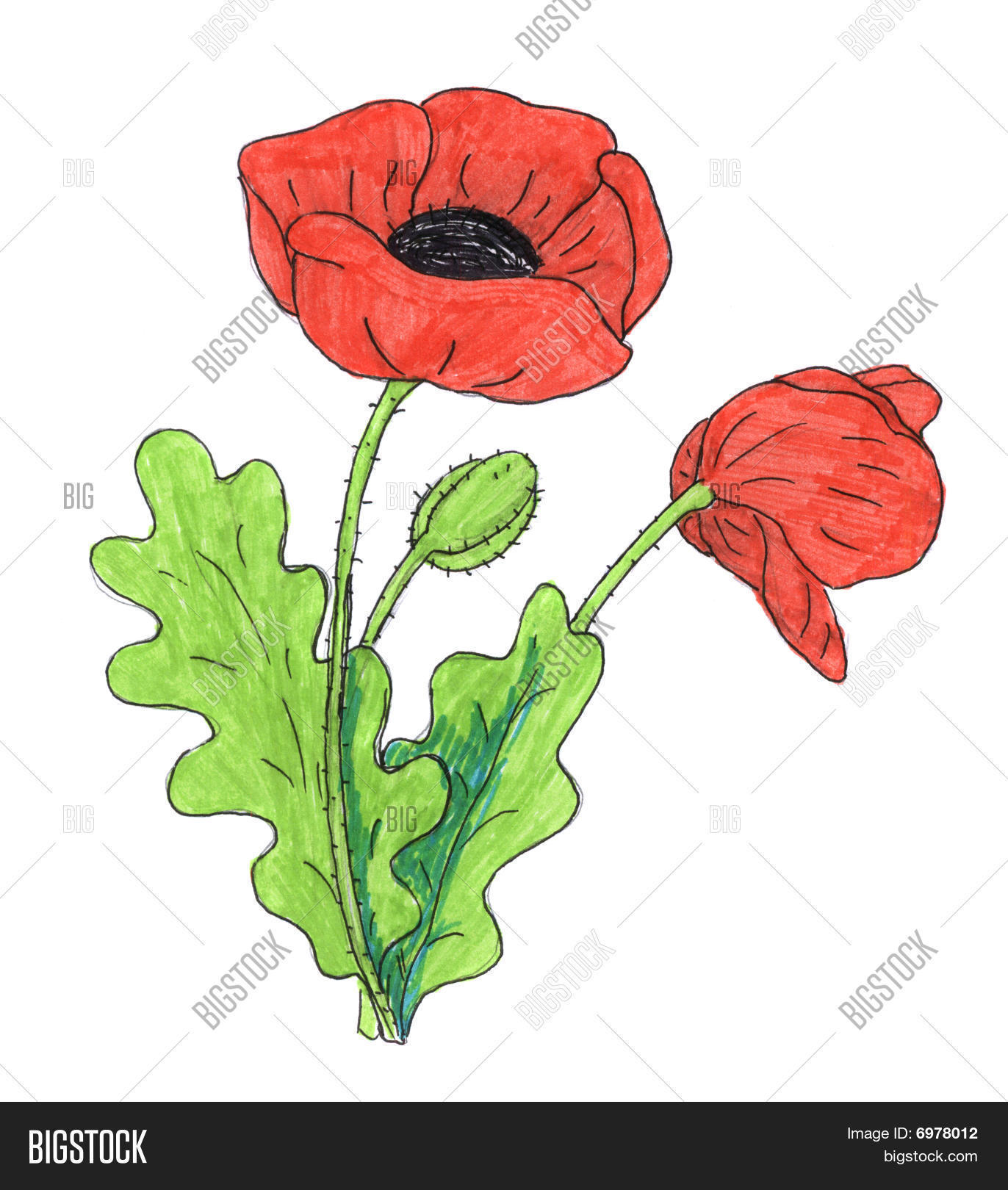 Big flowers drawing at getdrawings free for personal use big 1372x1620 poppy flower drawing image amp photo bigstock mightylinksfo